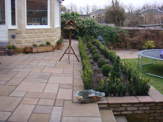 My garden just built (Buxus sempervirens (Common box))