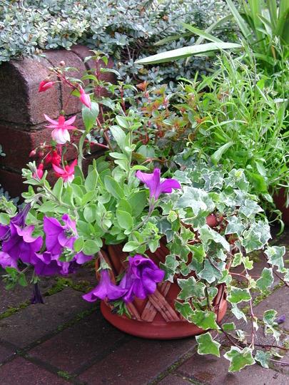 Lattice pot with summer colour