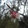 Blossom_reduced