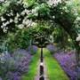 Garden_june_2006_025