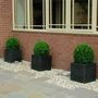 3 black planters with box balls (Buxus sempervirens (Common box))