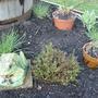New Herb Garden - April 2008