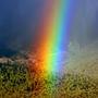 Starteling Rainbow