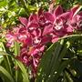 Balboa_park_02_2_2010_042