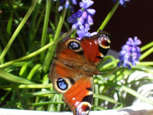butterfly in garden pot