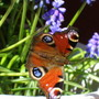 butterfly in garden pot