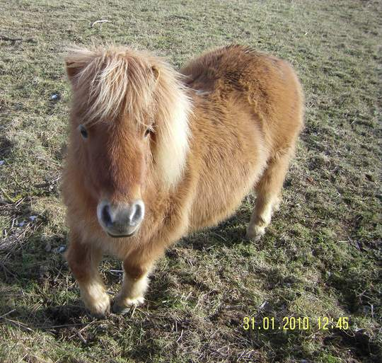 Small_Horse_1.jpg