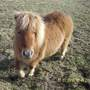 Small_horse_1