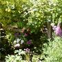 Corner of back garden