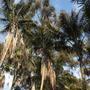 Balboa_park_02_2_2010_002