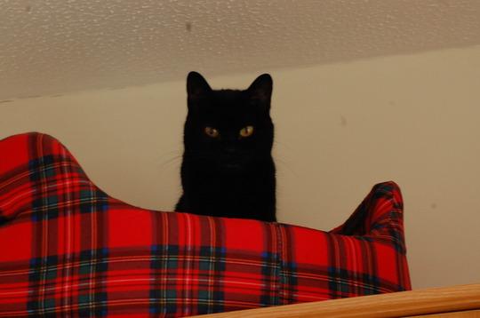 Millie Kitten !