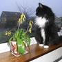 lachenalia nelsonii -  and Merlin The Cat (Lachenalia Nelsonii)