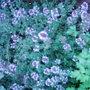 Garden_photo_s_092