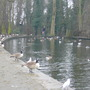 Wakefield  Park Bird life