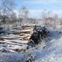 Wee Wood - Firewood anyone ?