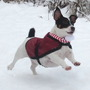 Holly - Enjoying the snow '10