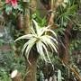 Bromeliads on Tree Stump.