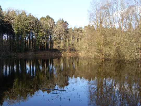 Donadea Forest