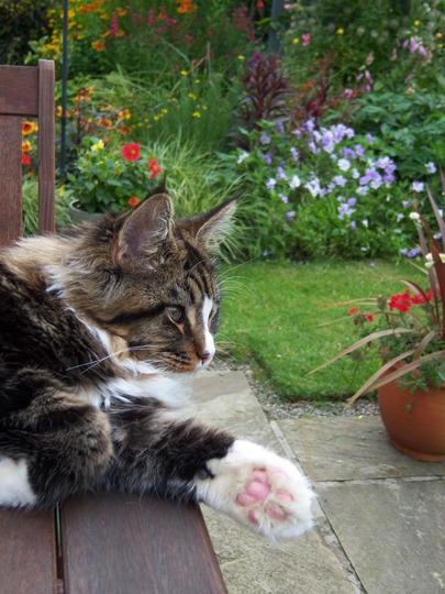 This garden is my purrfect background!