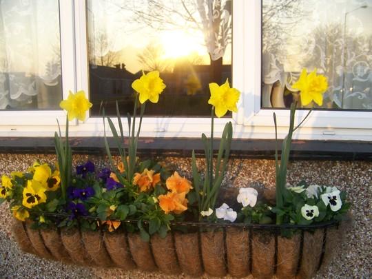 Winter flowers 2009