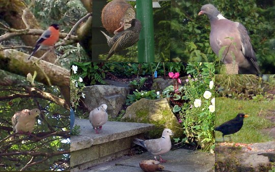 Garden Birds Collage