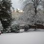 Garden in the snow.