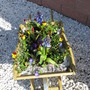 Spring Wheelbarrow planted up