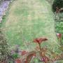 L_hand_lawn