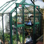 New little greenhouse