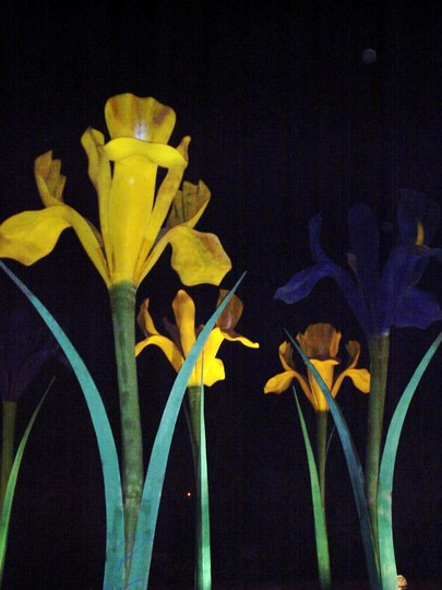 Iris by Floodlight 3