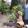 Pots, patio and pergola !
