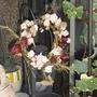 .pink rose and hip ..Septembar 2009