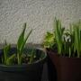 tulips .. 2010/february