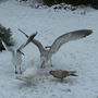 The_seagulls_have_landed_2