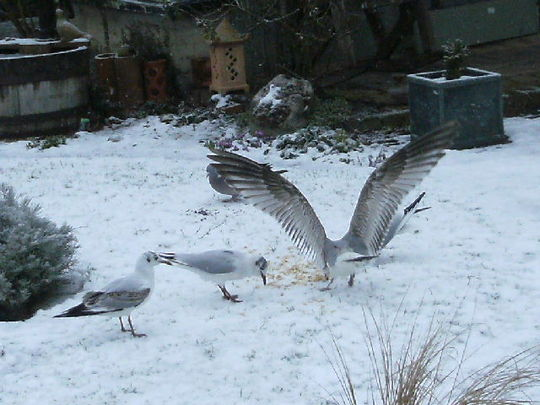 The Seagulls have landed    (3 )