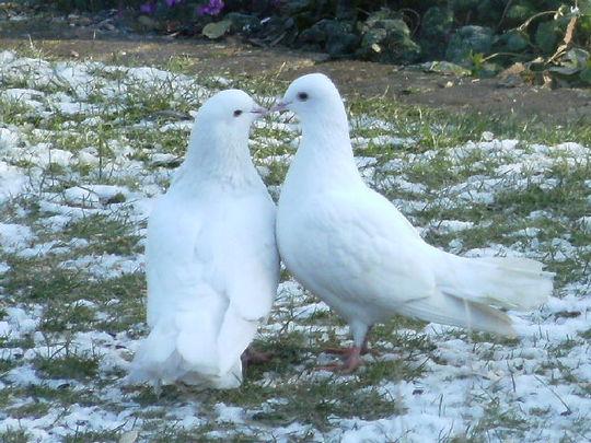 Snowballs Romance