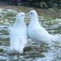 Snowballs_romance