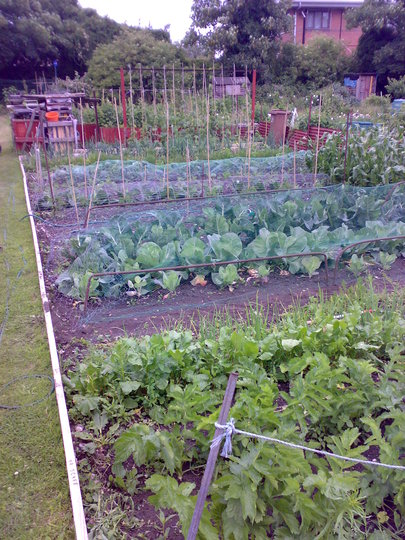 my no 2 plot