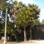 Balboa_park_02_23_10_053