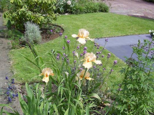 Open Gardens Witham Essex