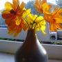 tutti frutti (Cosmos sulphureus (Cosmea Bright Lights))