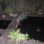 next stage of my pond