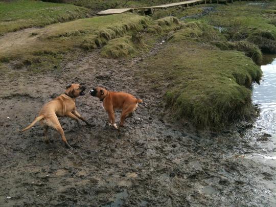 Mud wrestlers!