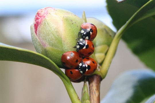 Update on dozing ladybirds