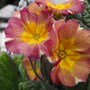 1st_flowers_004