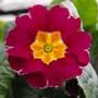 1st_flowers_003