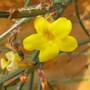 1st_flowers_007