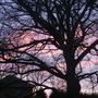 end of a lovely day (Fagus sylvatica (Common Beech))