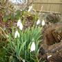 my_spring_flowers_2010004.jpg