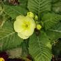 my_spring_flowers_2010008.jpg